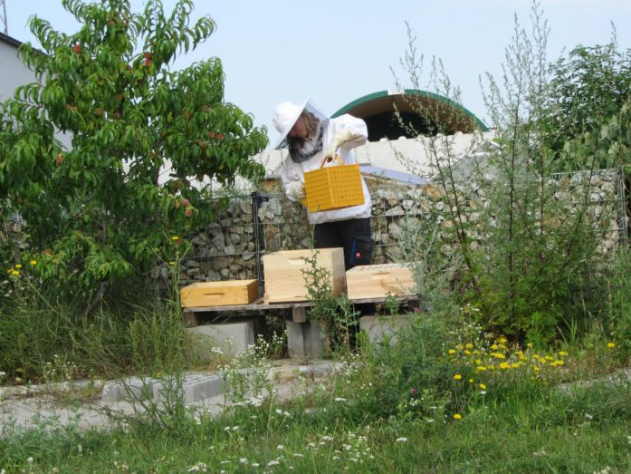 Hektar Nektar_Andrea Vastag-Siklosy