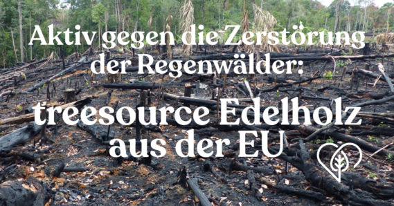 Treesource: Aktiv gegen die Zerstörung des Regenwaldes vorgehen